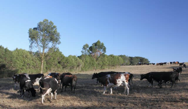 Shady milkers